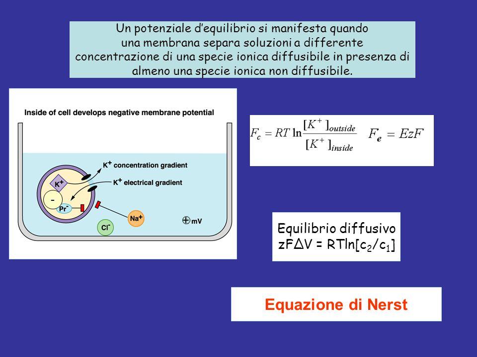 Equazione di Nerst Equilibrio diffusivo zFΔV = RTln[c2/c1]